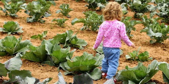 Feeding Fast Kids, Slow Food